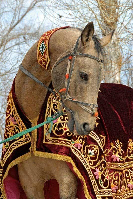فروش انواع جل اسب